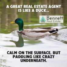 agent-like-a-duck-watermark