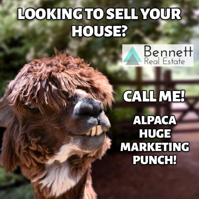 alpaca-marketing-punch-watermark